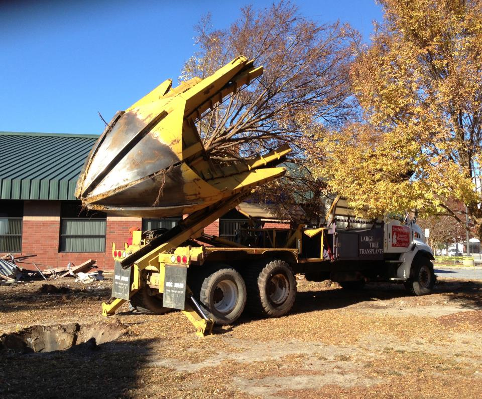 City Saves Trees During Expansion Project